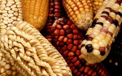 Stoa TP Backgrounder #3: GMO Labeling